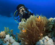 Woman Scuba Diver finds Nemo Stock Image