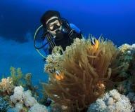 Woman Scuba Diver finds Nemo. Scuba Diver and Red Sea Anemonefish stock image