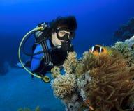 Woman Scuba Diver finds Nemo. Scuba Diver and Red Sea Anemonefish stock photos