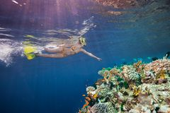 Woman scuba diver pointing to corals stock photo