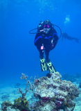 Woman scuba diver underwater on coral reef. A woman scuba diver hangs suspended above a coral outcropping on Columbia Reef in Cozumel, Mexico surrounded by the Royalty Free Stock Photos