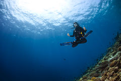 Woman scubadiving stock photos