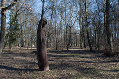 Woman  sculpture carved from tree in the sunny forest Stock Images