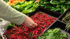 Woman selecting fresh hot chili pepper in grocery store stock video footage