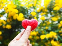 Woman selfie hand holding heart shape over flowers blur background stock photos