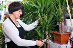 Woman seller tending yucca palm trees Royalty Free Stock Photography
