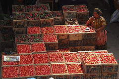 Woman selling many tomatoes crates. Stock Images