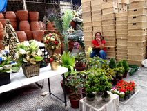 A woman sells decorative plants and flowers, christmas decors and baskets in Dapitan Market Stock Photo