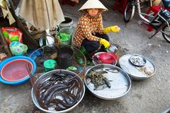 Woman sells fish and seafood on street market in My Tho, Vietnam. MY THO, VIETNAM - FEBRUARY 15: Woman sells fish and seafood on street market on February 15 stock photography