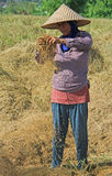 Woman is separating grains on the field nearly Royalty Free Stock Images
