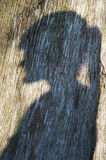 Woman shadow. Shadow of a profile of a woman engraved in a tree Stock Image