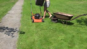 Woman shake grass from mower collector in wheelbarrow at yard. 4K stock video