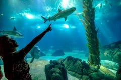 Woman shark enjoyng. Caucasian blonde woman pointing a shark in oceanarium. Female tourist enjoying in ocean exhibit tank. Lisbon, Portugal. Tourism, holidays Royalty Free Stock Photography