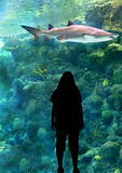 Woman and Shark Stock Photography