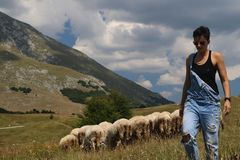 Woman with sheeps in the background royalty free stock image