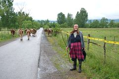 Woman shepherd on the road in the middle of the minefield Royalty Free Stock Photos