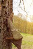Woman shoe on tree trunk Stock Photography