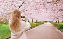 Woman shooting spring blossom garden with her phone. Rear view of a young woman using her mobile phone to capture images of the path and cherry blossoms tree at Stock Photo
