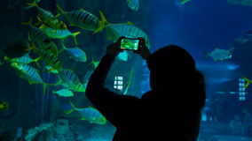 A woman shoots video of fishes in the oceanarium stock footage