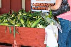 Woman Shopping for Ears of Corn Stock Photos