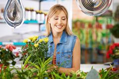 Woman is shopping in the flower shop royalty free stock photo