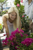 Woman Shopping For Flowers At Plant Nursery Stock Image