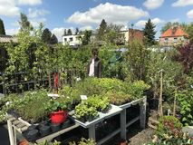 Woman shopping for new plants and flowers at gardening and plants outdoor vendor stock images
