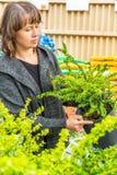 Woman shopping in the garden centre. A woman shopping for plants in the garden centre stock images