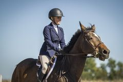 Woman riding a bay hunter jumper gelding. Woman in show attire riding a bay hunter jumper gelding Stock Photos