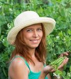Woman show pods fresh peas Stock Photo