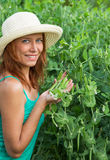 Woman show pods fresh peas Stock Image