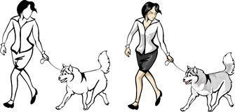 Woman showing dogs on the show. Vector woman showing dogs on the show Stock Images