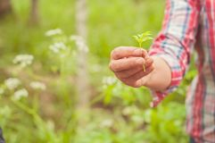 A woman showing an eatable plant. A Finnish nature offers lots of clean raw food which is ecological, healthy and nutritious, stra. Ight from the nature stock photos