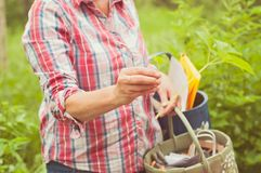 A woman showing an eatable plant. A Finnish nature offers lots of clean raw food which is ecological, healthy and nutritious. Straight from the nature royalty free stock image