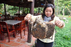 A woman is showing her beekeepers tray from her farm in Ben Tre city. Royalty Free Stock Photos
