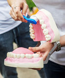 Woman showing how to clean the teeth with tooth brush properly and right Stock Photography