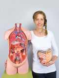 Woman showing intestines model and human body stock photography