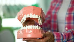 Woman showing model of jaw, children education for dental care and oral hygiene. Stock photo royalty free stock images