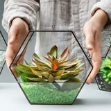 Woman showing succulent garden in glass florarium stock images