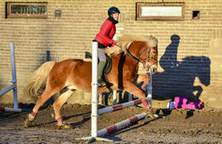 Woman showjumping Stock Images