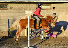 Woman showjumping Royalty Free Stock Images