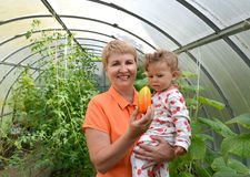 The woman shows to the little granddaughter sweet pepper in the greenhouse royalty free stock photos