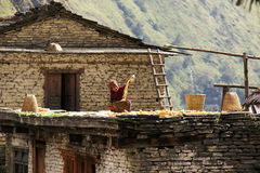 Woman sifts corn on roof Royalty Free Stock Images