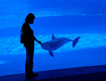 Woman  silhouette at aquarium. Woman silhouette looking at dolphin behind glass in aquarium, Corpus Christi TX Royalty Free Stock Photos