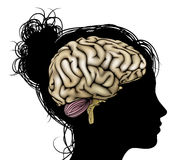 Woman silhouette brain. A womans head in silhouette with brain. Concept for mental, psychological, brain development, learning and education or other medical Stock Photos
