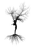 Woman silhouette with roots. On white background Royalty Free Stock Photos