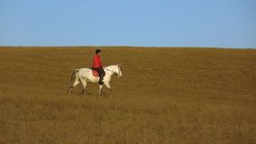 Woman sits on a horse side view an athlete rides on a horse. Slow motion. Woman sits on a horse side view an athlete rides on a horse on a background in the stock video footage