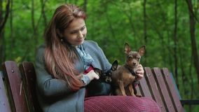 Woman sits on a bench in the woods and ironing two small dogs on her knees. Woman is sitting on a bench in the woods and ironing two small dogs on her knees stock video