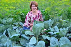 Woman sitting on cabbage field in summer. Woman sitting on a cabbage field in summer stock image