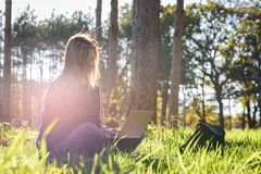 Woman sitting in forest with laptop enjoying late afternoon sun royalty free stock photos